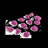 prise escalade osmose lot gratton rose 3