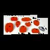 prise escalade osmose lot bools orange 1