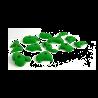 prise escalade enfant osmose lot travel vert clair